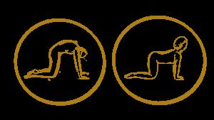 Katze Yoga